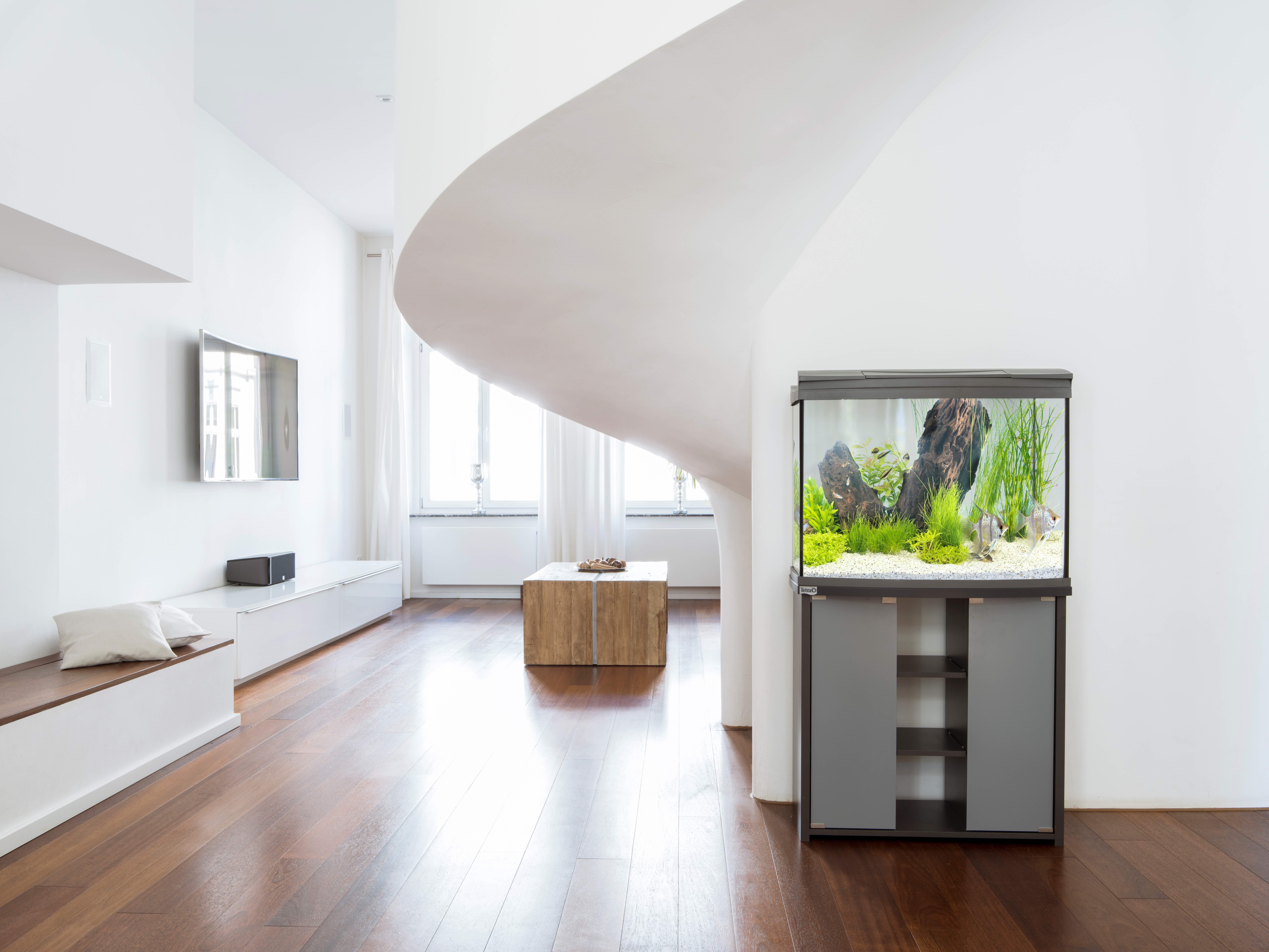4 raisons d 39 offrir un aquarium son enfant - Magazine maison et jardin ...